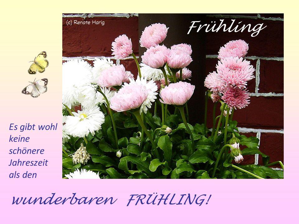 Es gibt wohl keine schönere Jahreszeit als den wunderbaren FRÜHLING! Frühling