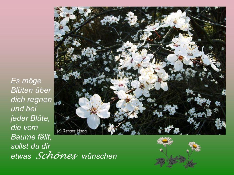 Es möge Blüten über dich regnen und bei jeder Blüte, die vom Baume fällt, sollst du dir etwas Schönes wünschen