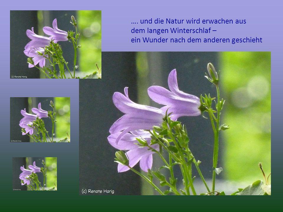 …. und die Natur wird erwachen aus dem langen Winterschlaf – ein Wunder nach dem anderen geschieht