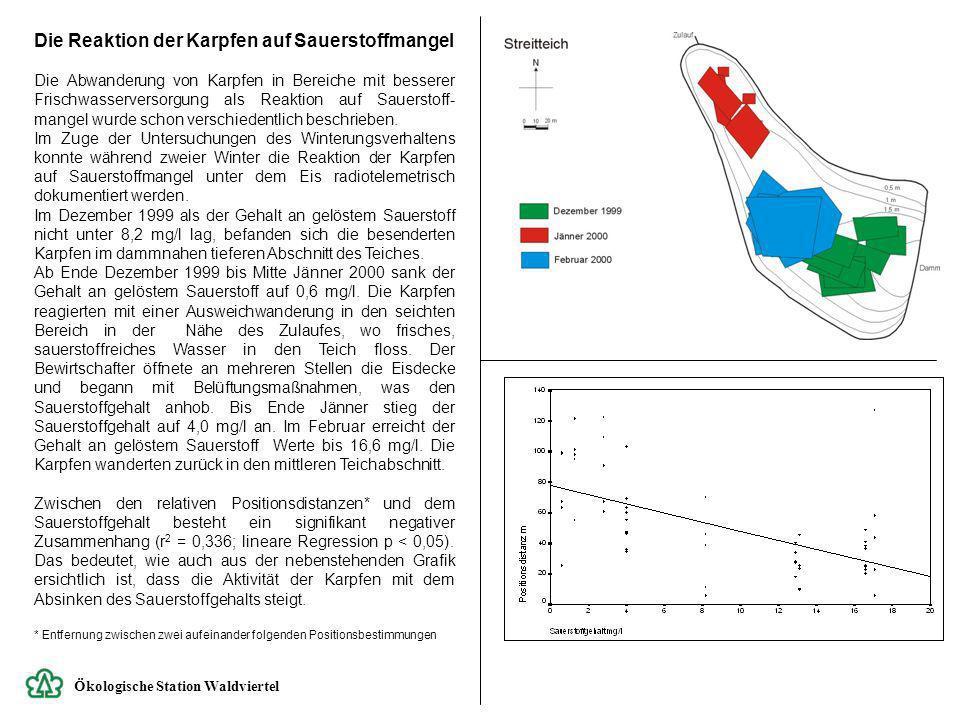 Ökologische Station Waldviertel Die Reaktion der Karpfen auf Sauerstoffmangel Die Abwanderung von Karpfen in Bereiche mit besserer Frischwasserversorg