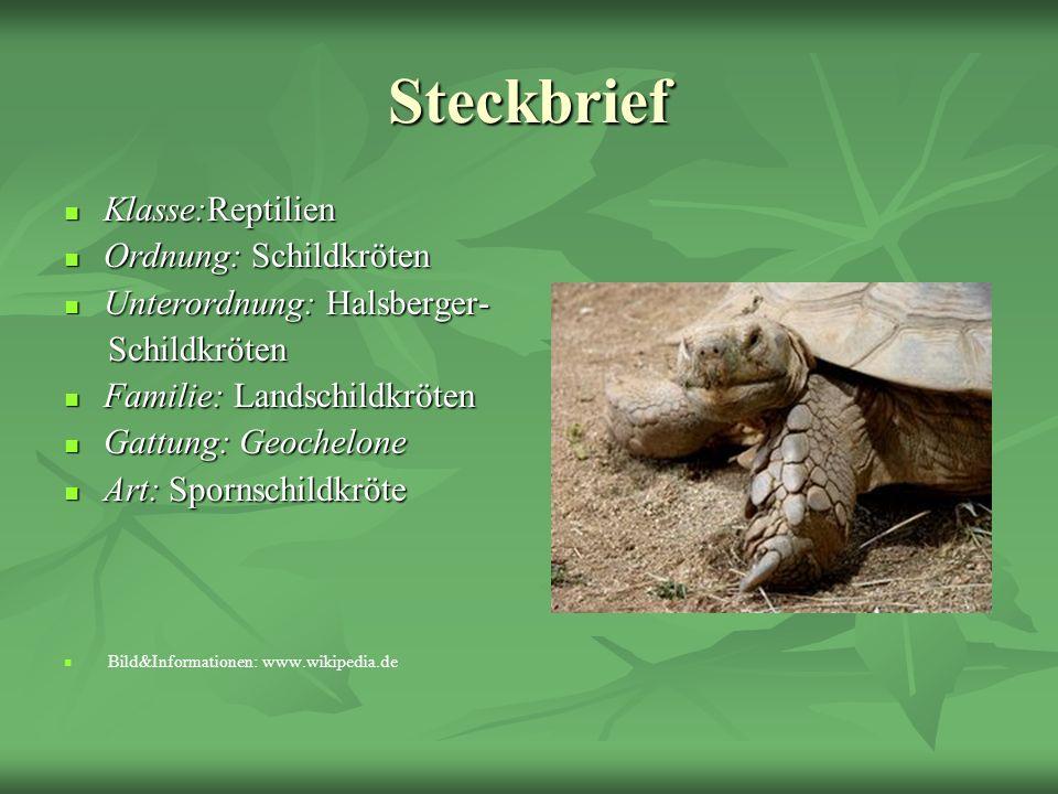 Steckbrief Klasse:Reptilien Klasse:Reptilien Ordnung: Schildkröten Ordnung: Schildkröten Unterordnung: Halsberger- Unterordnung: Halsberger- Schildkrö