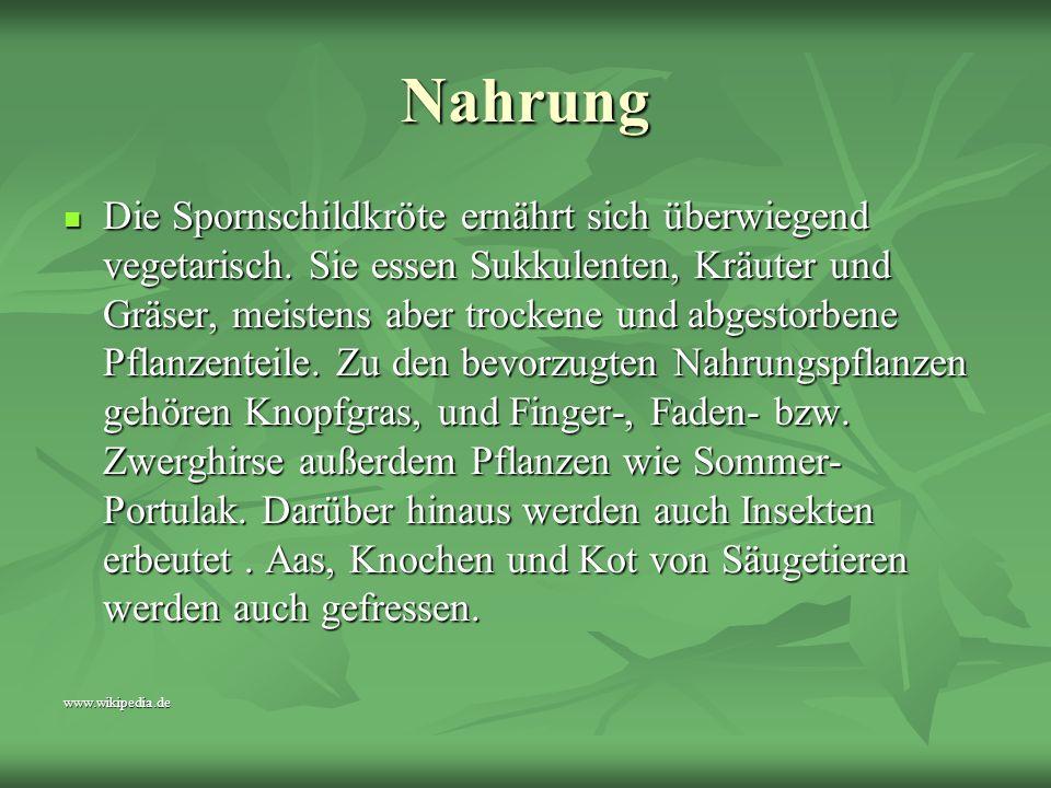 www.kleintierpension.de