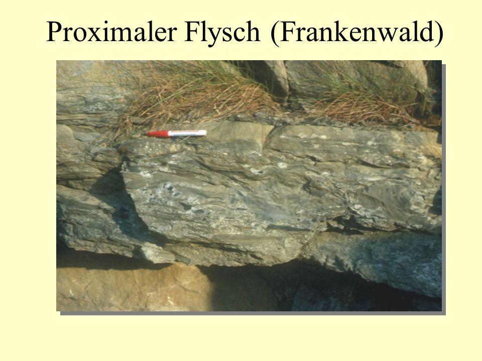 Proximaler Flysch (Frankenwald)