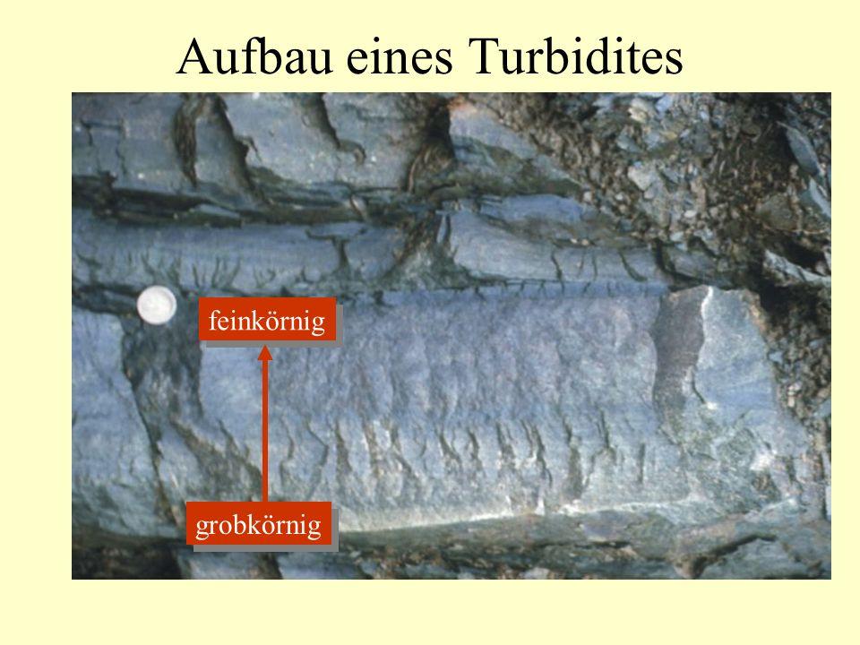 Aufbau eines Turbidites grobkörnig feinkörnig