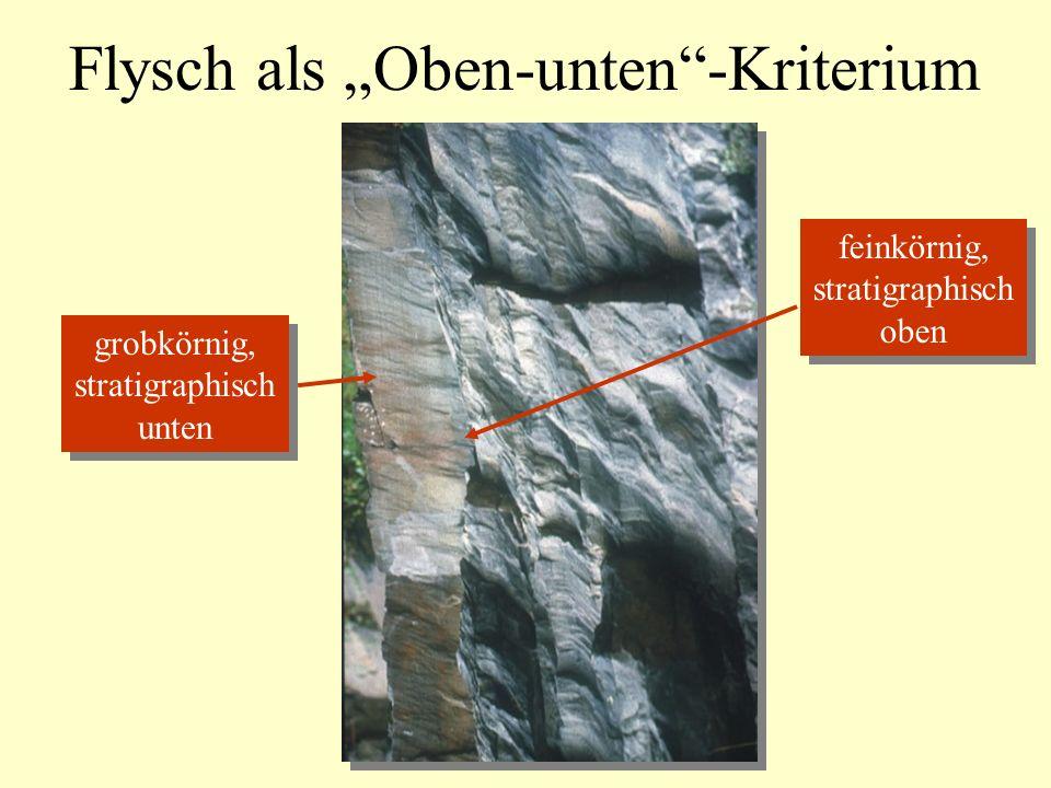 Flysch als Oben-unten-Kriterium grobkörnig, stratigraphisch unten grobkörnig, stratigraphisch unten feinkörnig, stratigraphisch oben feinkörnig, stratigraphisch oben
