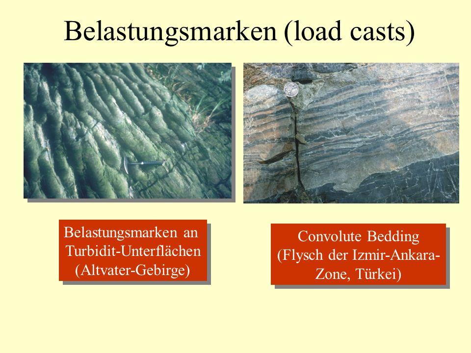 Belastungsmarken (load casts) Belastungsmarken an Turbidit-Unterflächen (Altvater-Gebirge) Belastungsmarken an Turbidit-Unterflächen (Altvater-Gebirge) Convolute Bedding (Flysch der Izmir-Ankara- Zone, Türkei) Convolute Bedding (Flysch der Izmir-Ankara- Zone, Türkei)