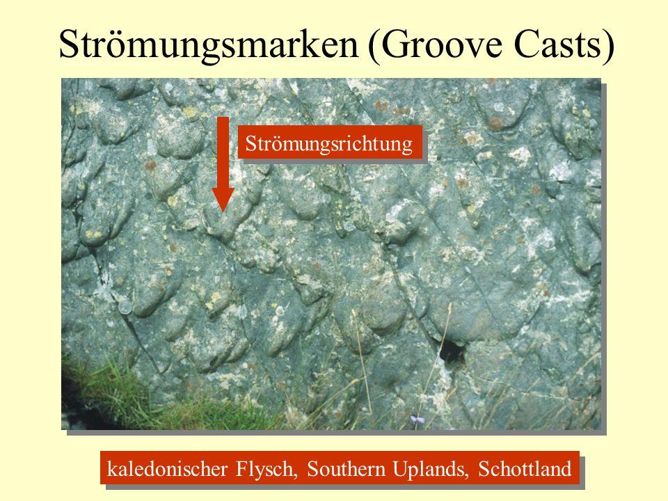 Strömungsmarken (Groove Casts) kaledonischer Flysch, Southern Uplands, Schottland Strömungsrichtung