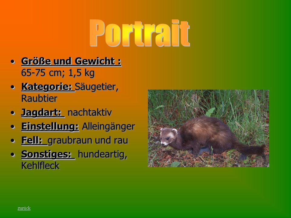 Größe und Gewicht :Größe und Gewicht : 65-75 cm; 1,5 kg Kategorie:Kategorie: Säugetier, Raubtier Jagdart:Jagdart: nachtaktiv Einstellung:Einstellung: