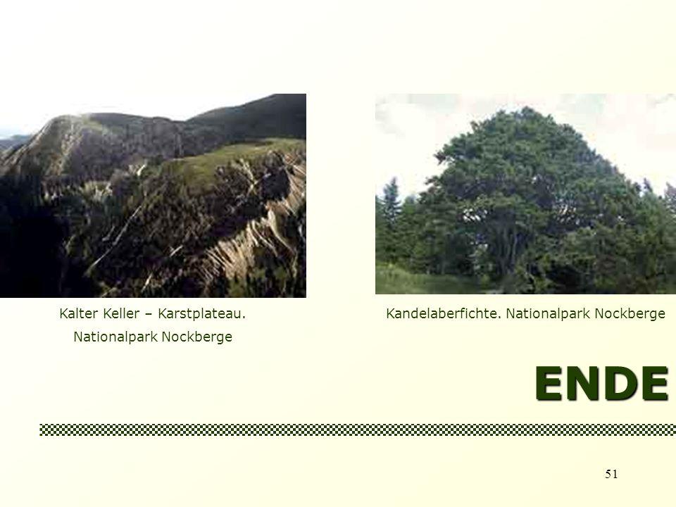 51 ENDE Kalter Keller – Karstplateau.Nationalpark Nockberge Kandelaberfichte.