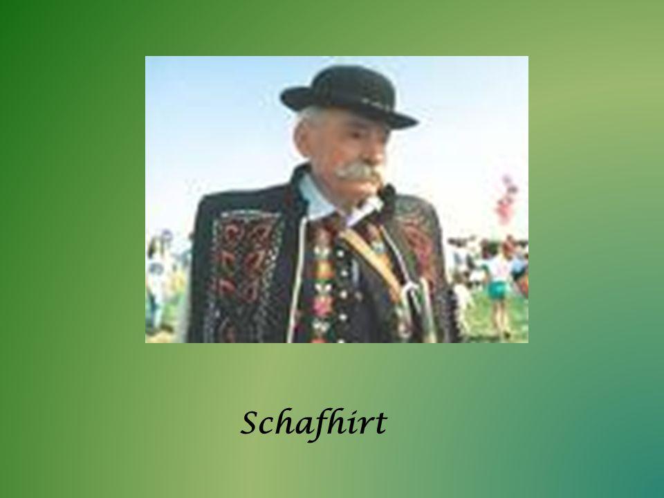 Schafhirt