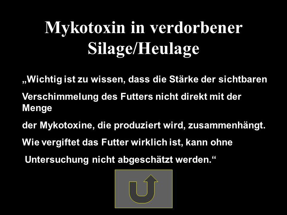 Mykotoxin in verdorbener Silage/Heulage Wichtig ist zu wissen, dass die Stärke der sichtbaren Verschimmelung des Futters nicht direkt mit der Menge der Mykotoxine, die produziert wird, zusammenhängt.