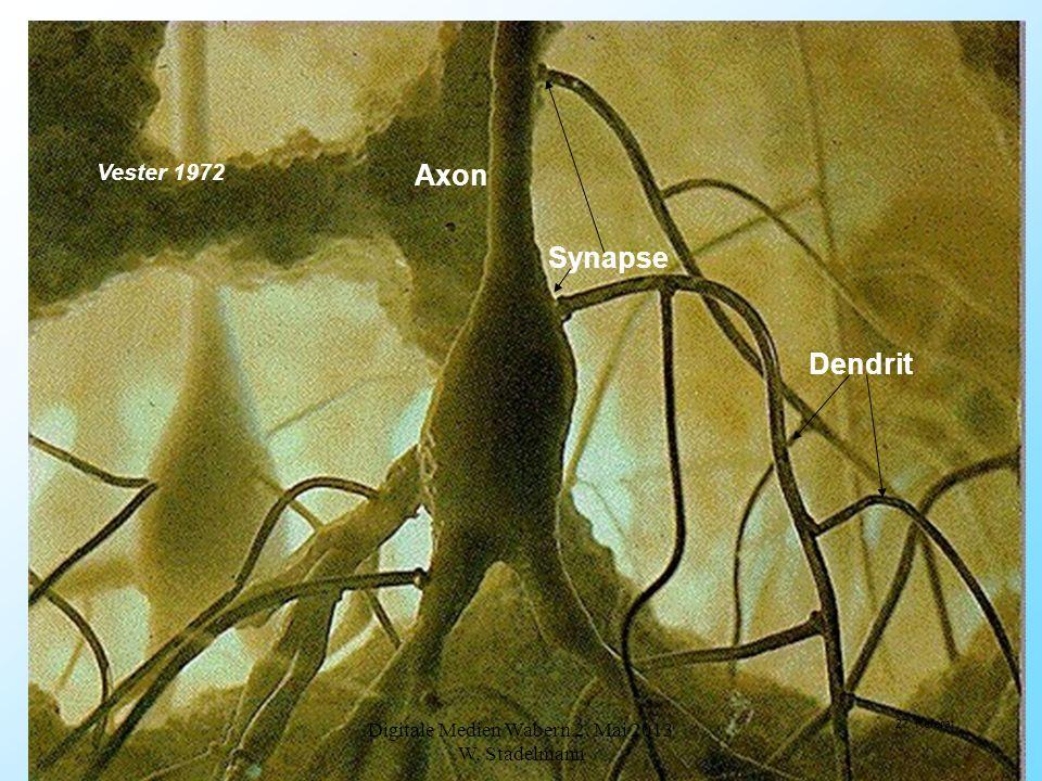 Synapse Axon Dendrit Vester 1972 Digitale Medien Wabern 2. Mai 2013 W. Stadelmann 27 Referat