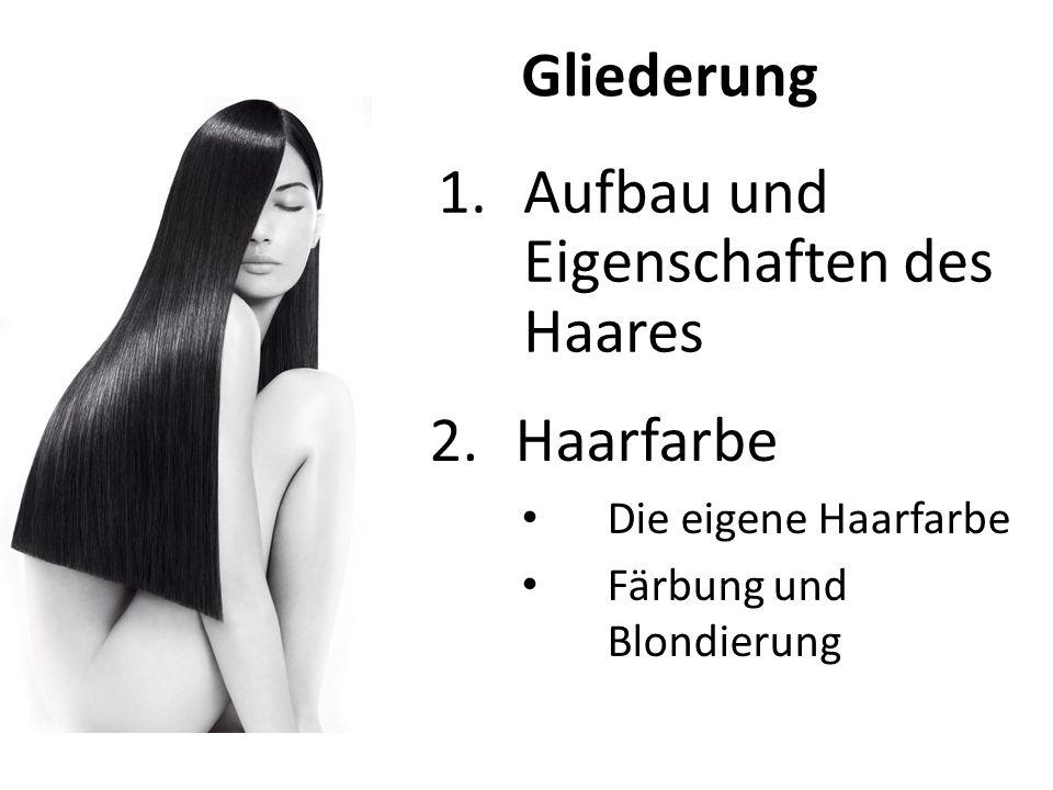 Haarschaft Talgschicht Cuticula Cortex Haarwurzel Grobgliederung des Haares
