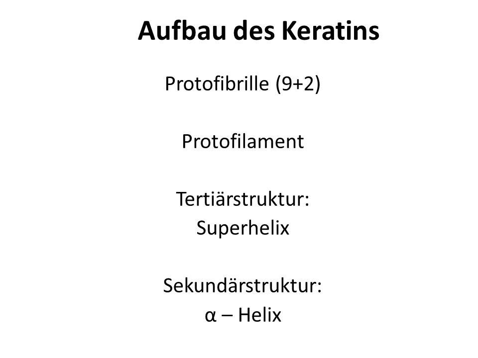 Aminosäuren mit hydrophoben Resten Cystein ValinPhenylalanin Aufbau des Keratins