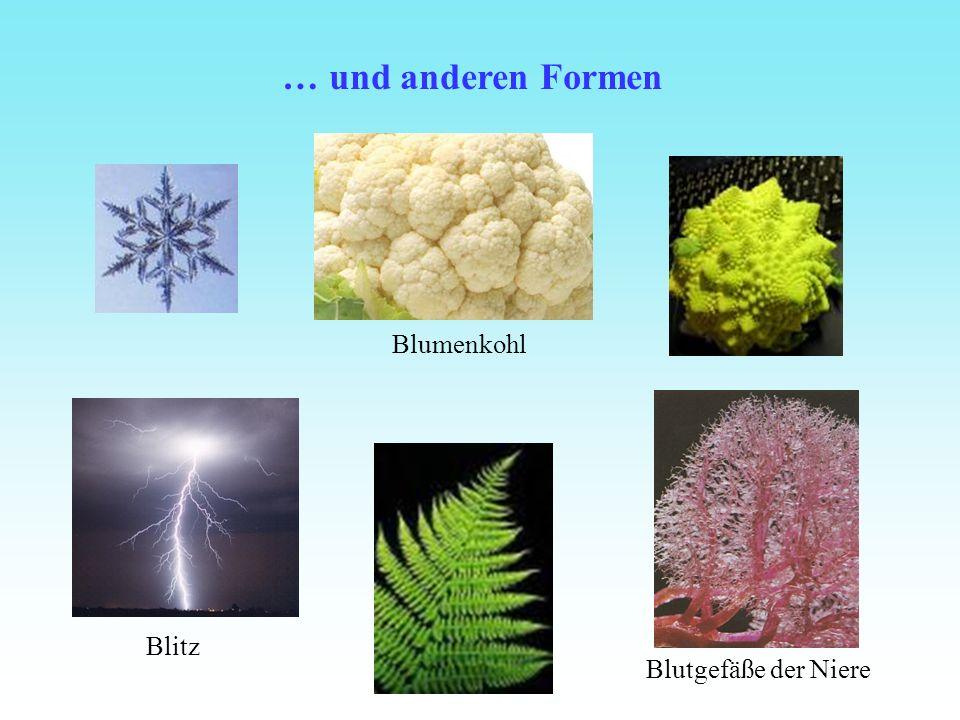 … und anderen Formen Blitz Blutgefäße der Niere Blumenkohl