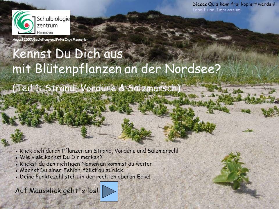 20 Strand-Wegerich Strandhafer Andel (-gras) Dünen-Quecke