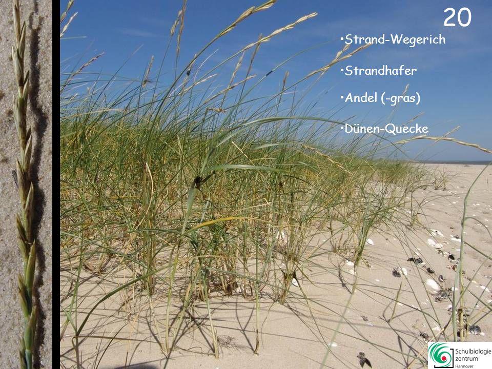 19 Salz-Schuppenmiere Strandflieder Sand-Stiefmütterchen Gänse-Fingerkraut