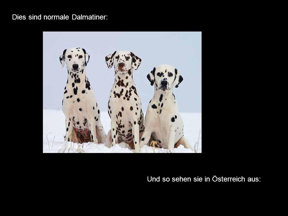 Dies sind normale Dalmatiner: Und so sehen sie in Österreich aus: