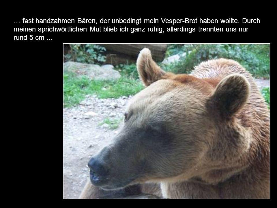 … fast handzahmen Bären, der unbedingt mein Vesper-Brot haben wollte.