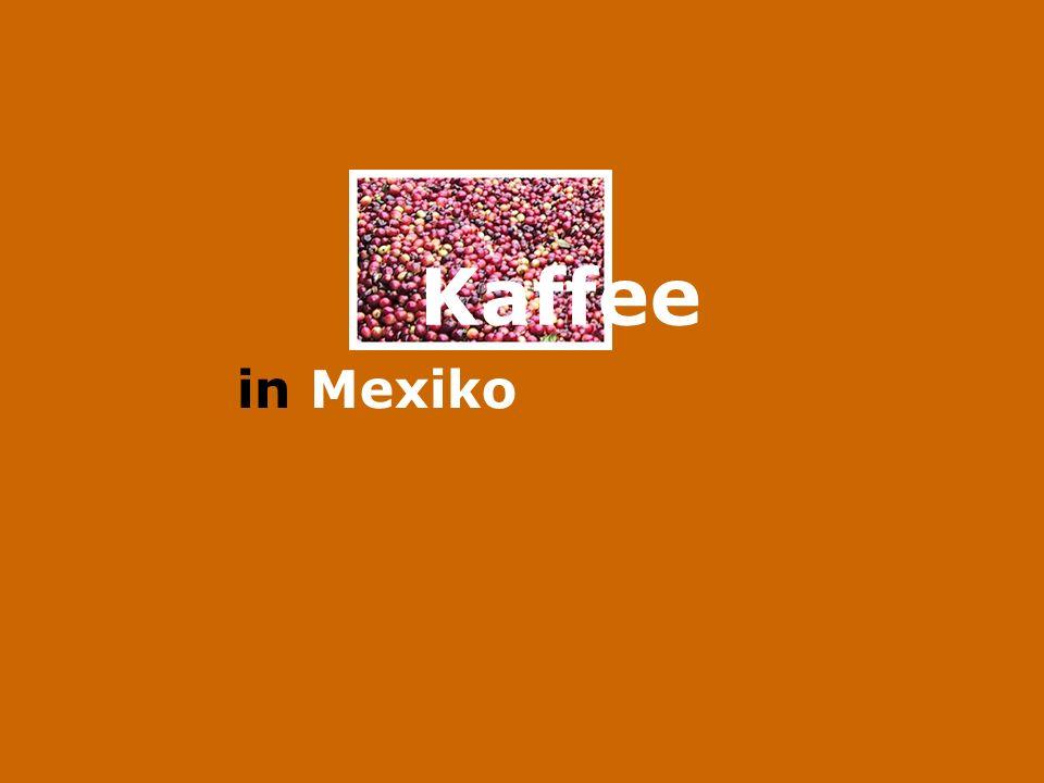Aktuelle Daten Gegenwärtig ist México der weltweit viertgrößte Kaffeproduzent: fast 5 Millionen Sack á 60kg.