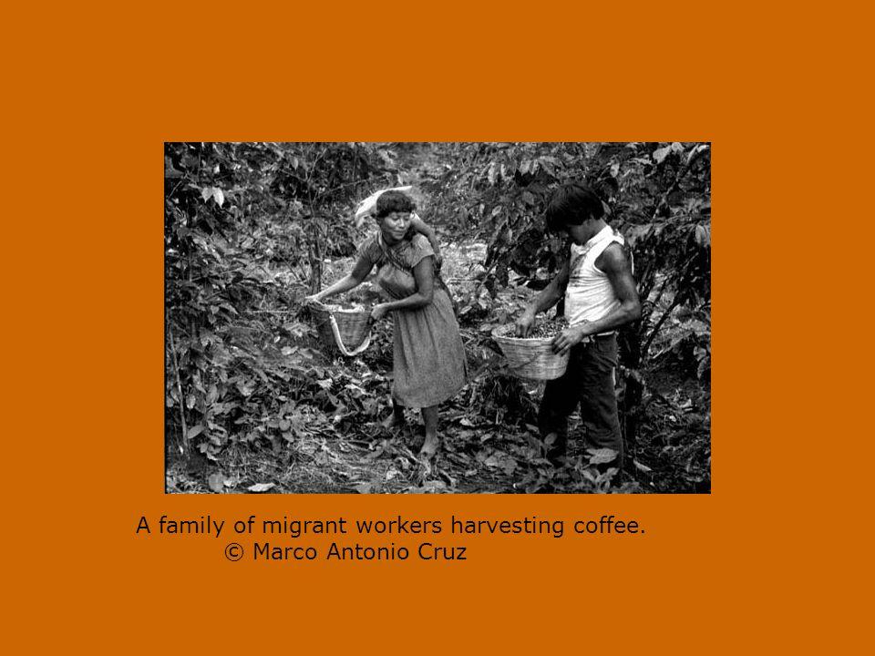 Kaffee in Mexiko
