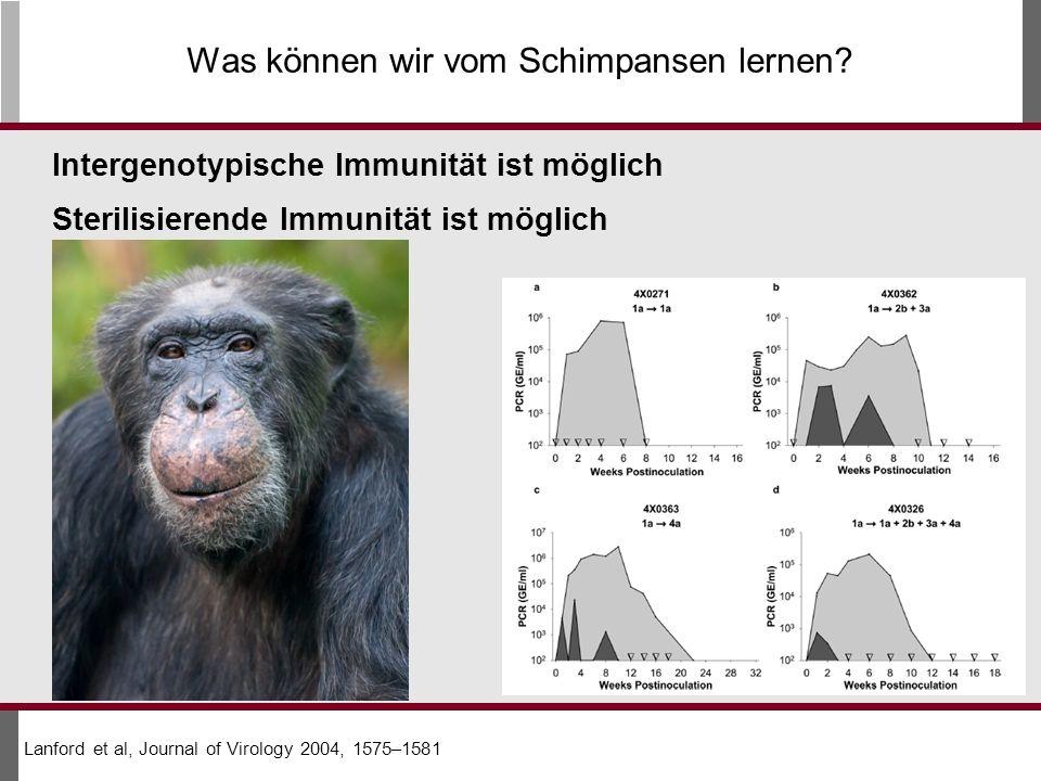 Was können wir vom Schimpansen lernen.
