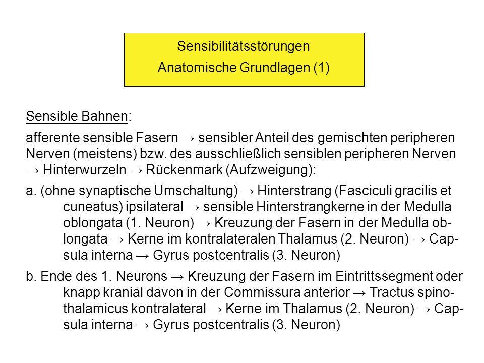 Sensibilitätsstörungen Anatomische Grundlagen (1) Sensible Bahnen: afferente sensible Fasern sensibler Anteil des gemischten peripheren Nerven (meiste