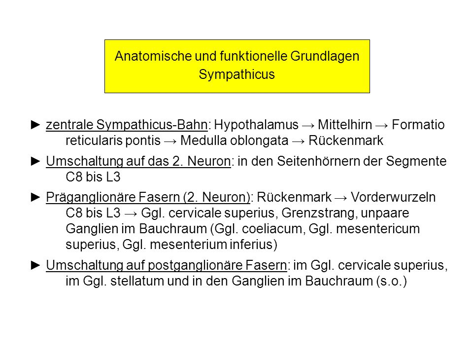 Anatomische und funktionelle Grundlagen Sympathicus zentrale Sympathicus-Bahn: Hypothalamus Mittelhirn Formatio reticularis pontis Medulla oblongata R