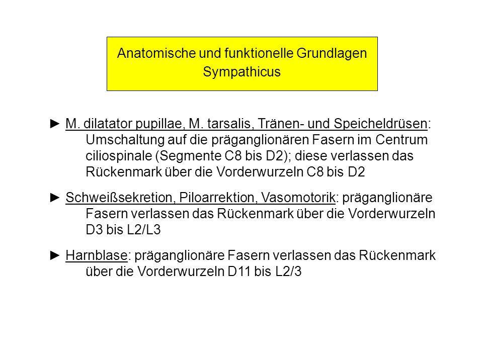 Anatomische und funktionelle Grundlagen Sympathicus M. dilatator pupillae, M. tarsalis, Tränen- und Speicheldrüsen: Umschaltung auf die präganglionäre
