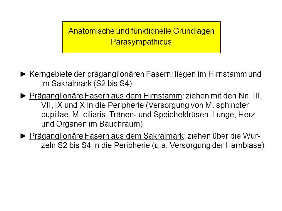 Anatomische und funktionelle Grundlagen Parasympathicus Kerngebiete der präganglionären Fasern: liegen im Hirnstamm und im Sakralmark (S2 bis S4) Präg