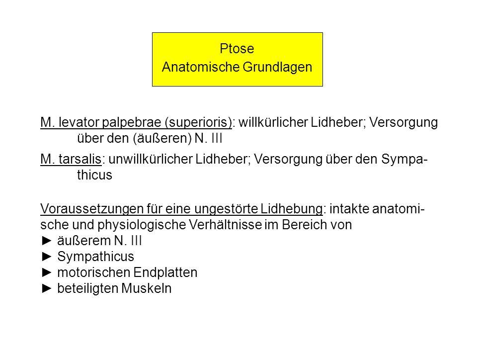 Ptose Anatomische Grundlagen M. levator palpebrae (superioris): willkürlicher Lidheber; Versorgung über den (äußeren) N. III M. tarsalis: unwillkürlic