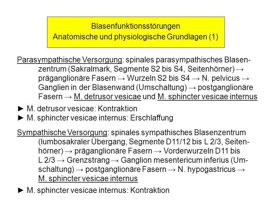 Blasenfunktionsstörungen Anatomische und physiologische Grundlagen (1) Parasympathische Versorgung: spinales parasympathisches Blasen- zentrum (Sakral