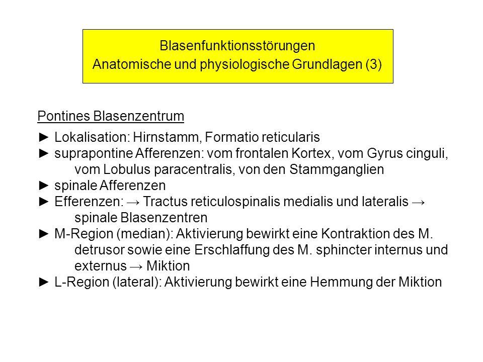 Blasenfunktionsstörungen Anatomische und physiologische Grundlagen (3) Pontines Blasenzentrum Lokalisation: Hirnstamm, Formatio reticularis supraponti