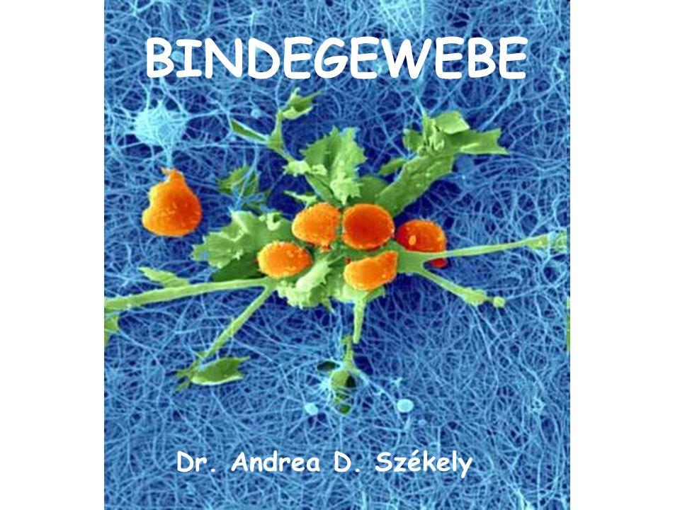 BINDEGEWEBE Dr. Andrea D. Székely