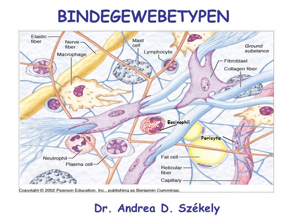BINDEGEWEBETYPEN Pericyta Eosinophil Dr. Andrea D. Székely