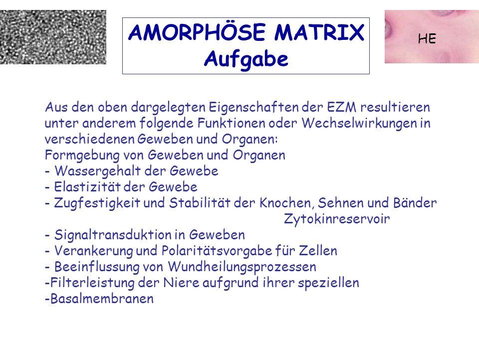 AMORPHÖSE MATRIX Aufgabe HE Aus den oben dargelegten Eigenschaften der EZM resultieren unter anderem folgende Funktionen oder Wechselwirkungen in vers