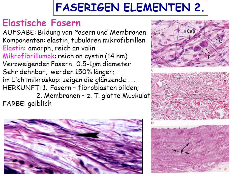Elastische Fasern AUFGABE: Bildung von Fasern und Membranen Komponenten: elastin, tubulären mikrofibrillen Elastin: amorph, reich an valin Mikrofibrillumok: reich on cystin (14 nm) Verzweigenden Fasern, 0.5-1µm diameter Sehr dehnbar, werden 150% länger; im Lichtmikroskop: zeigen die glänzende …..