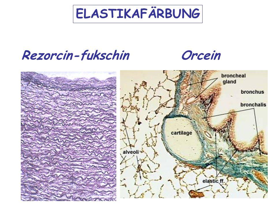 ELASTIKAFÄRBUNG Rezorcin-fukschinOrcein