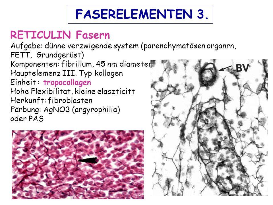 RETICULIN Fasern Aufgabe: dünne verzwigende system (parenchymatösen organrn, FETT, Grundgerüst) Komponenten: fibrillum, 45 nm diameter Hauptelemenz III.