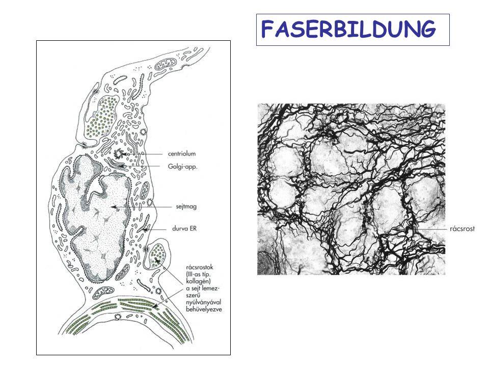 FASERBILDUNG