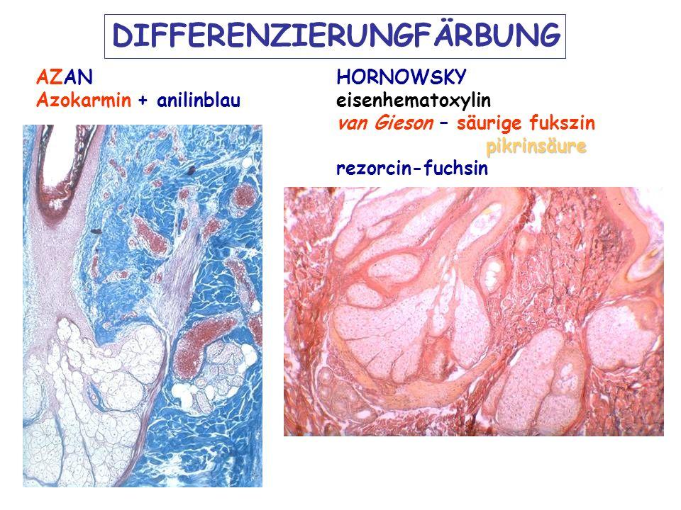 DIFFERENZIERUNGFÄRBUNG AZAN Azokarmin + anilinblau HORNOWSKY eisenhematoxylin van Gieson – säurige fukszin pikrinsäure rezorcin-fuchsin