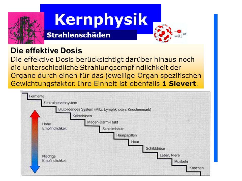 Kernphysik Strahlenschäden Die effektive Dosis Die effektive Dosis berücksichtigt darüber hinaus noch die unterschiedliche Strahlungsempfindlichkeit der Organe durch einen für das jeweilige Organ spezifischen Gewichtungsfaktor.