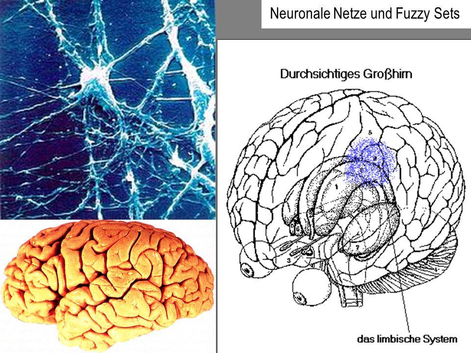 Interpretation des neuronalen Netzes als Black Box Struktur eines typischen künstlichen Neuronalen Netzes
