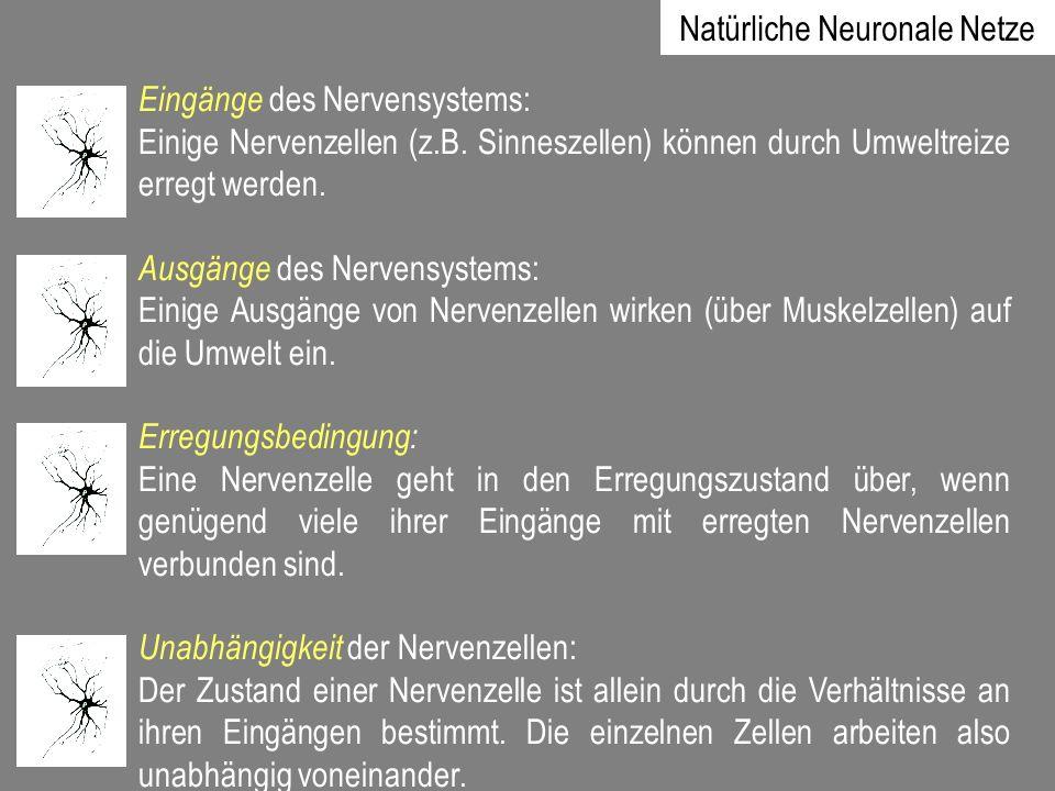 Eingänge des Nervensystems: Einige Nervenzellen (z.B. Sinneszellen) können durch Umweltreize erregt werden. Ausgänge des Nervensystems: Einige Ausgäng