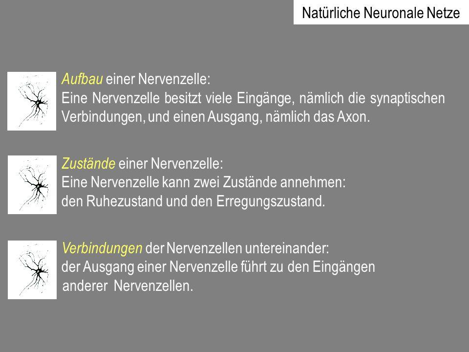 Aufbau einer Nervenzelle: Eine Nervenzelle besitzt viele Eingänge, nämlich die synaptischen Verbindungen, und einen Ausgang, nämlich das Axon. Zuständ