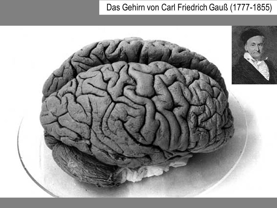Das Gehirn von Carl Friedrich Gauß (1777-1855)