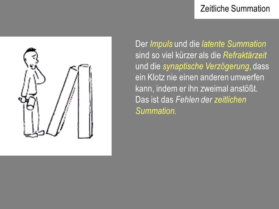 Zeitliche Summation Der Impuls und die latente Summation sind so viel kürzer als die Refraktärzeit und die synaptische Verzögerung, dass ein Klotz nie