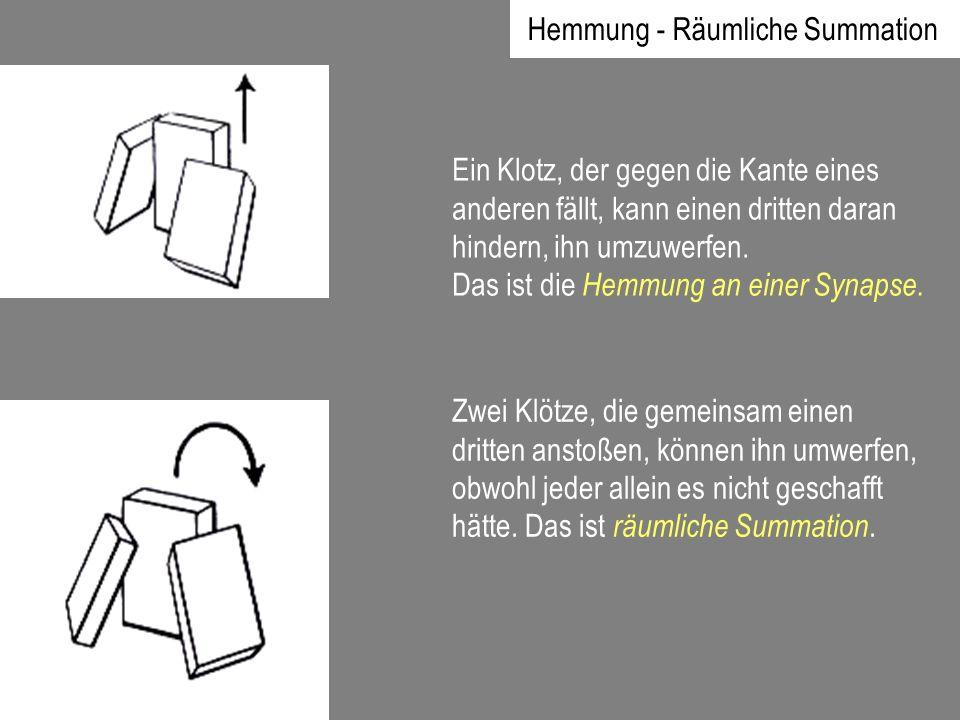 Hemmung - Räumliche Summation Ein Klotz, der gegen die Kante eines anderen fällt, kann einen dritten daran hindern, ihn umzuwerfen. Das ist die Hemmun