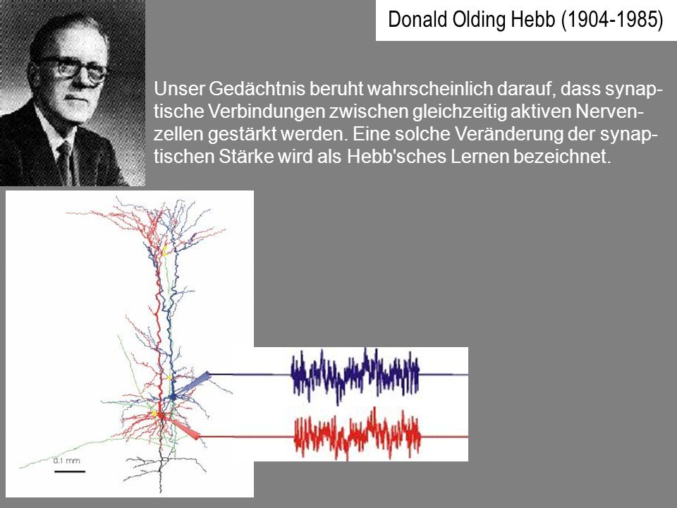 Donald Olding Hebb (1904-1985) Unser Gedächtnis beruht wahrscheinlich darauf, dass synap- tische Verbindungen zwischen gleichzeitig aktiven Nerven- ze