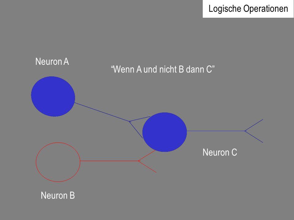 Neuron A Neuron B Neuron C Wenn A und nicht B dann C Logische Operationen